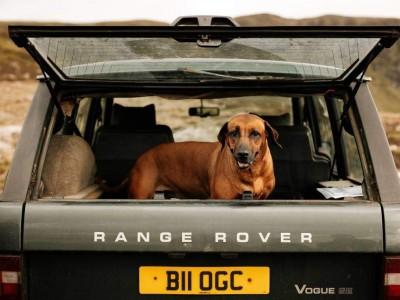 Transportar animais de estimação: como ter uma viagem de carro segura.